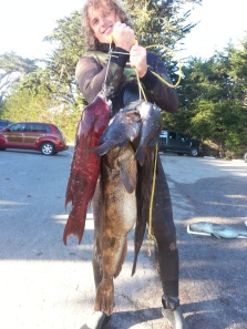 "35"" Lingcod, 30"" Lingcod, 25"" California Sheepshead, some Blue Rockfish, and an Olive Rockfish"